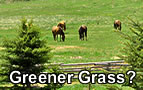 Looking for Greener Grass?